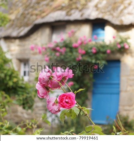 Pink roses in front of a beautiful rural cottage with tatched roof - stock photo