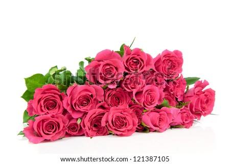 Pink roses isolated on white background - stock photo
