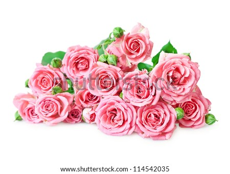 Pink roses  on a white background - stock photo