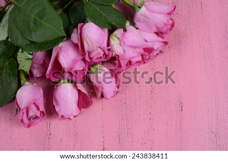 Pink Roses on pink wood background with copy space for your text here. - stock photo