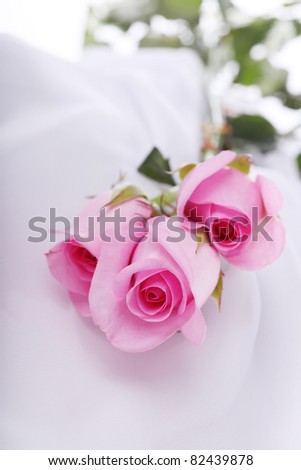 pink roses on silk - stock photo