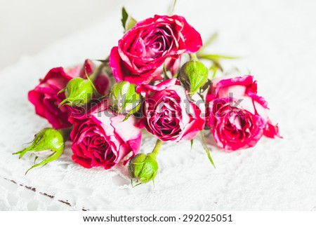 Pink roses over crochet doily. Vintage decor concept - stock photo