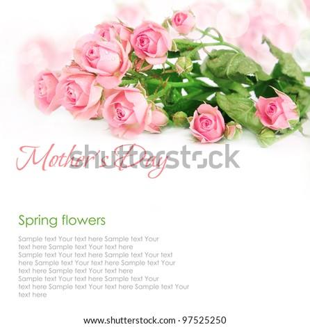 pink roses postcard design on white - stock photo