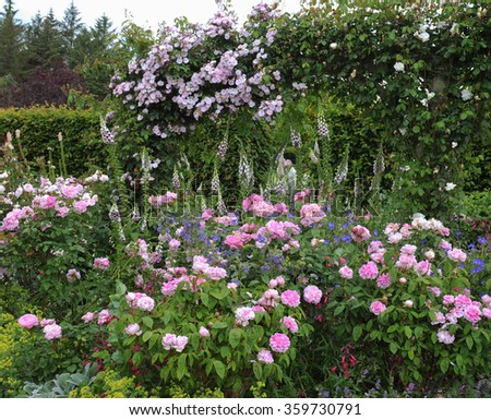 Pink Roses (Rosa) and Foxgloves (Digitalis) in an English Country Cottage Rose Garden in Devon, England, UK - stock photo