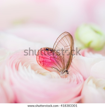 Pink roses with a butterfly - stock photo