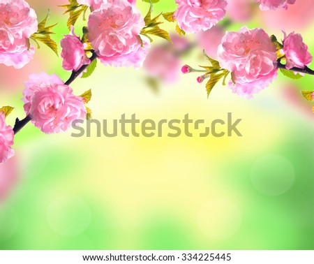Pink sakura blossom, bright spring nature flowers background - stock photo