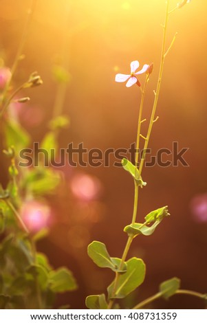 pink soft wild meadow beautiful flowers on yellow and blue natural background in field in evening sunlight. Outdoor fresh summer photo  - stock photo