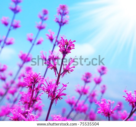 Pink spring flower field, abstract background with blue sky and sunlight - stock photo