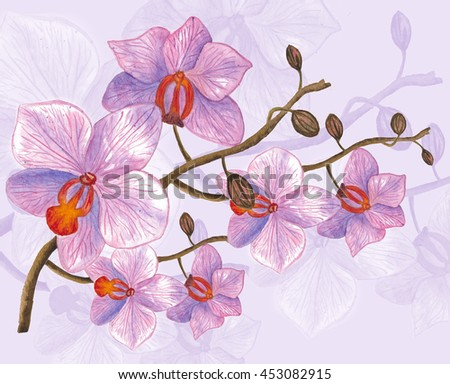 Pink streaked orchid flower. Watercolor hand drawn composition. Illustration - stock photo
