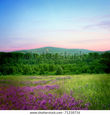 pink sunset  in the flower field - stock photo