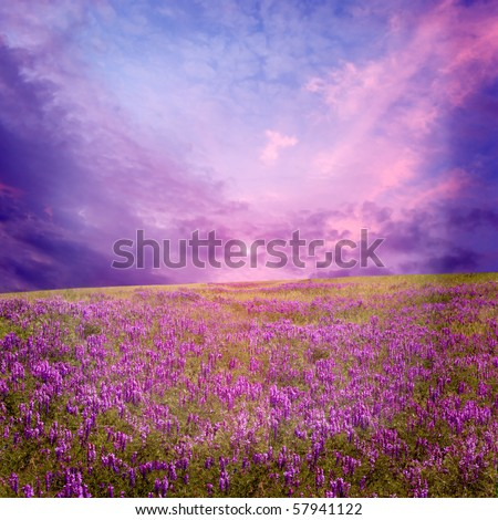 pink sunset is in the flower field - stock photo