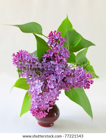 pink syringa bouquet in vase isolated in white - stock photo