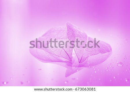 Pink transparent sheets . Beautiful artistic image of a skeleton leaf. Selective soft focus.