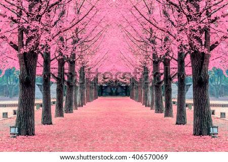 pink treenami island in korea - Pink Trees