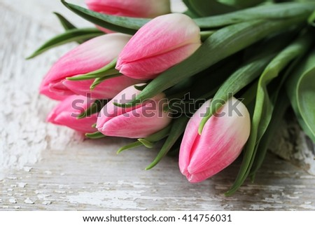 Pink Tulip buds close up / Mother's day flowers, selective focus - stock photo