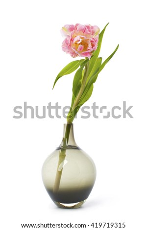Pink tulip flower in a black glass vase. Studio photography on a white background. Isolated. - stock photo