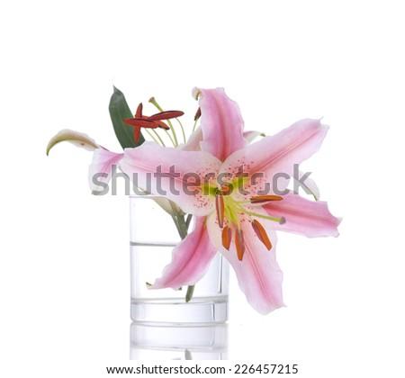 Pink tulip in vase isolated on white background - stock photo