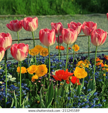 pink tulips and yellow poppies with multicolored garden flowers, instagram effect, square image - stock photo