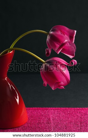 pink tulips in a vase on a black background - stock photo