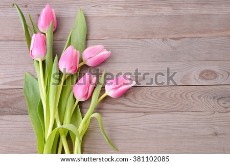 Pink tulips on wooden background. Tulip. Pink tulips, bouquet of tulips, tulips macro, tulips in bouquet, beautiful tulips, colorful tulips, green tulips petals, tulips on wood. - stock photo