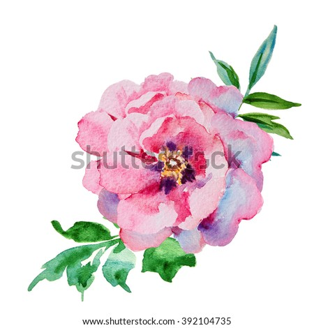 Pink, violet peony watercolor, bud - stock photo
