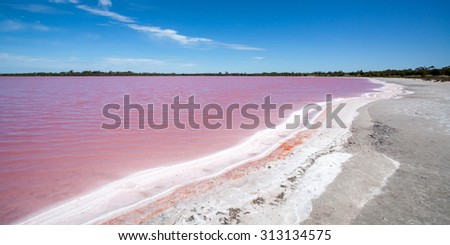Pink water of salt lake with salt crystals forming on the waters edge