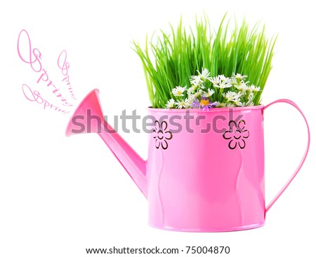Pink watering can of spring fresh wild flowers isolated on white background - stock photo