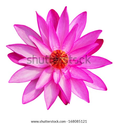 pink waterlily or lotus flower isolate on white background. - stock photo