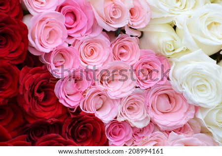 Pink, white, red roses background - stock photo