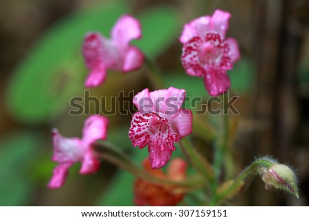 Pink wild flower after rainy