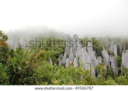Pinnacles in Gunung Mulu National Park. Borneo. Malaysia. - stock photo