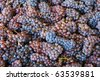 Pinot Gris grapes in the bin during the Late October harvest of wine grapes at a Umpqua Oregon winery. - stock photo