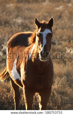 Pinto horse in summer pasture - stock photo