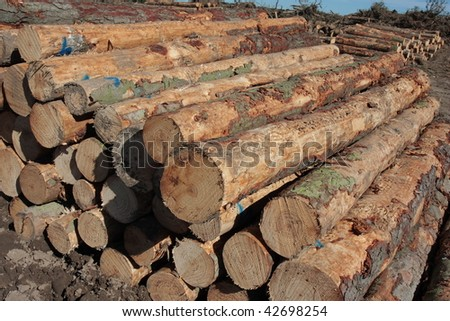 Pinus Radiata logs waiting for the truck to pick them in a clear-felled area of forest - stock photo