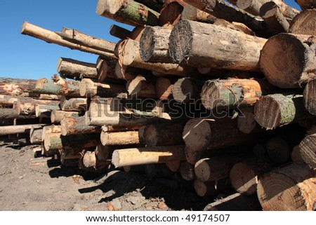 Pinus Radiata logs waiting for the truck to pick them up in a clear-felled area of forest - stock photo
