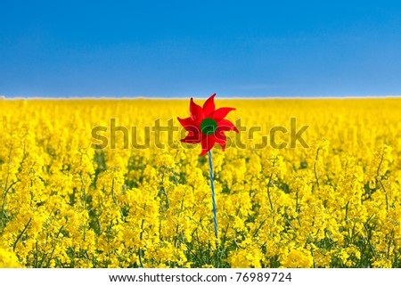 pinwheel  in a field of yellow rapeseed against the blue sky - stock photo
