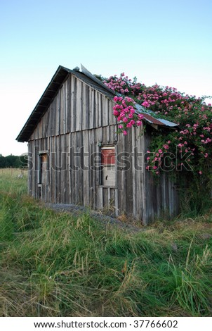 Pioneer Home Overgrown With Roses, Dexter, Oregon - stock photo