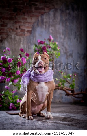 pit bull dog is cute flowers