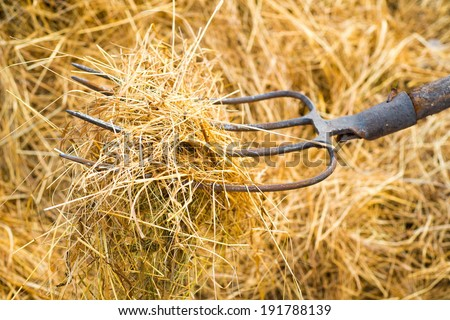 Pitchfork with hay - stock photo