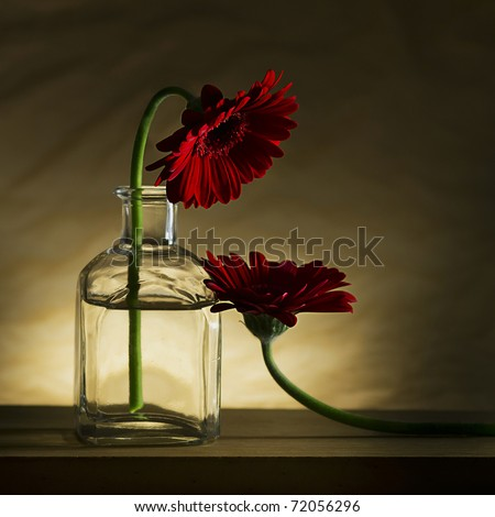 Piteous flower wants to drink, common daisy - stock photo