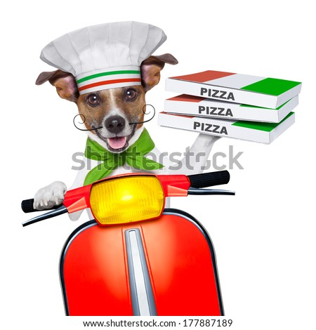 pizza delivery dog with a stack of pizza boxes on a motorbike - stock photo