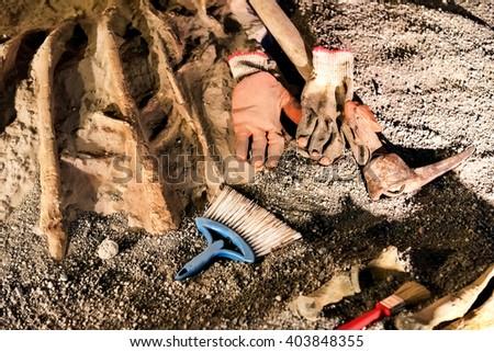 Place of paleonthology excavation with tools and dinosaur bones - stock photo