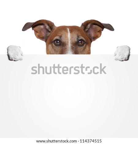 placeholder banner dog - stock photo