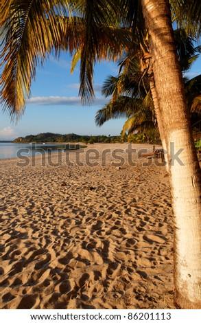 Plage et palmier au levée du soleil - stock photo