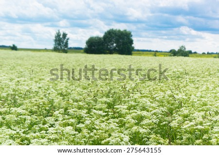 Plain Nature Nobody Outside  - stock photo
