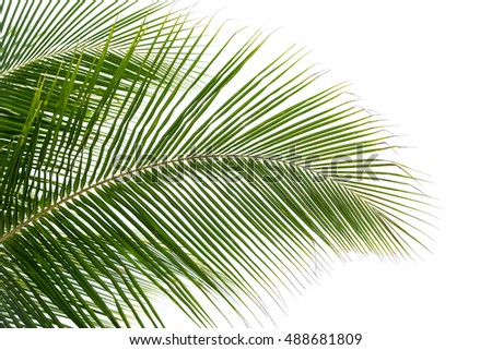 plam leaves isolated on the white