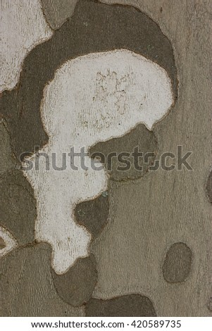 Plane tree or platanus bark texture, camouflage pattern - stock photo