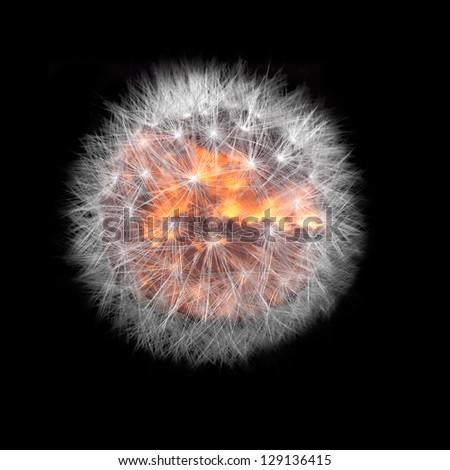 Planet dandelion. - stock photo