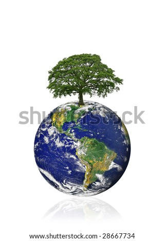 Planet earth featuring the American continents with an old oak tree in the position of north, over white background.