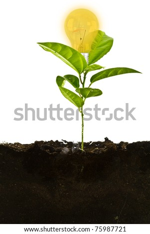 Plant above with bulb  and the soil